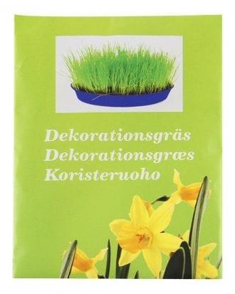 Dekorationsgräs Timotej