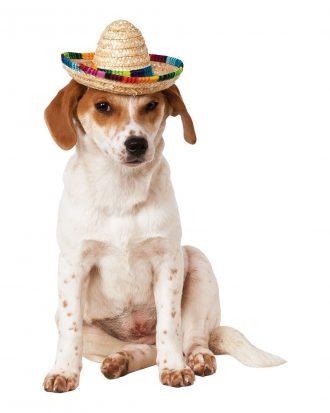 Sombrero för Hundar - Medium/Large